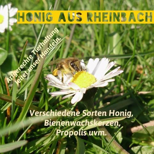Erste Arbeiten an den Bienen 2016